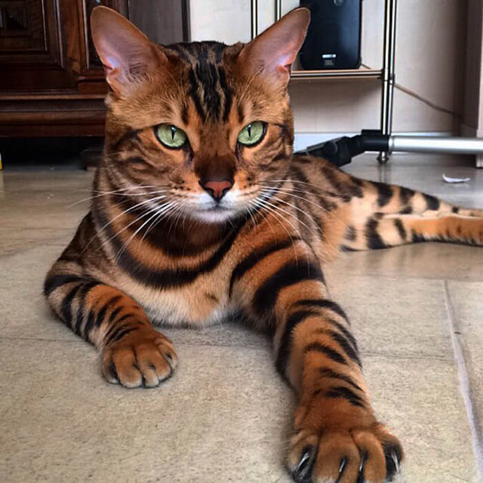 cutest cat of the world 11 (1)