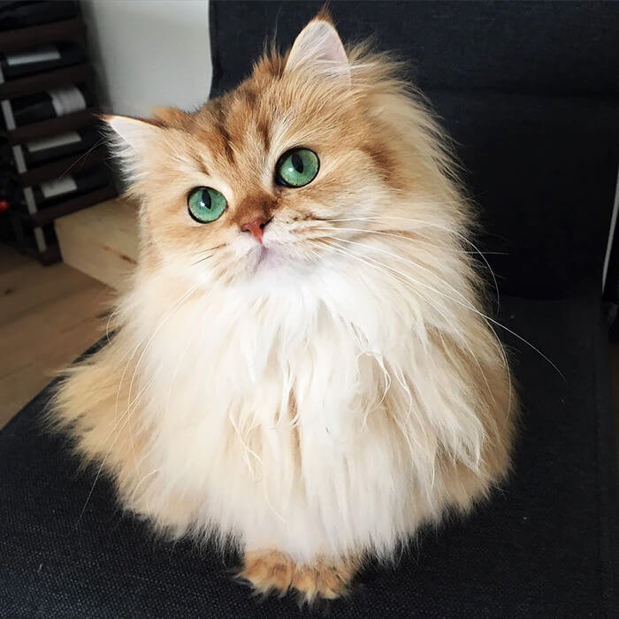 cutest cat of the world 12 (1)