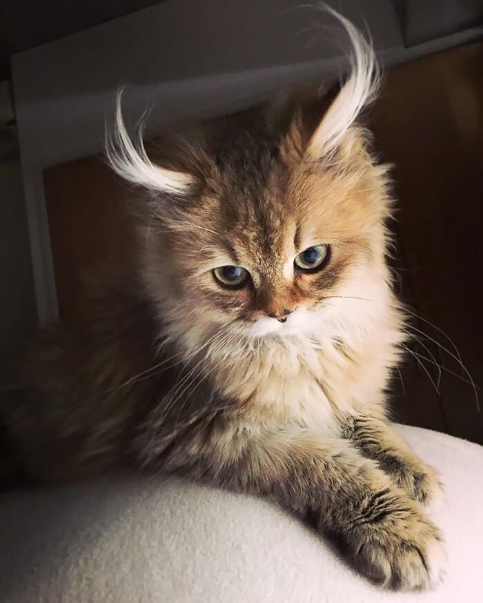 cutest cat ever 14 (1)