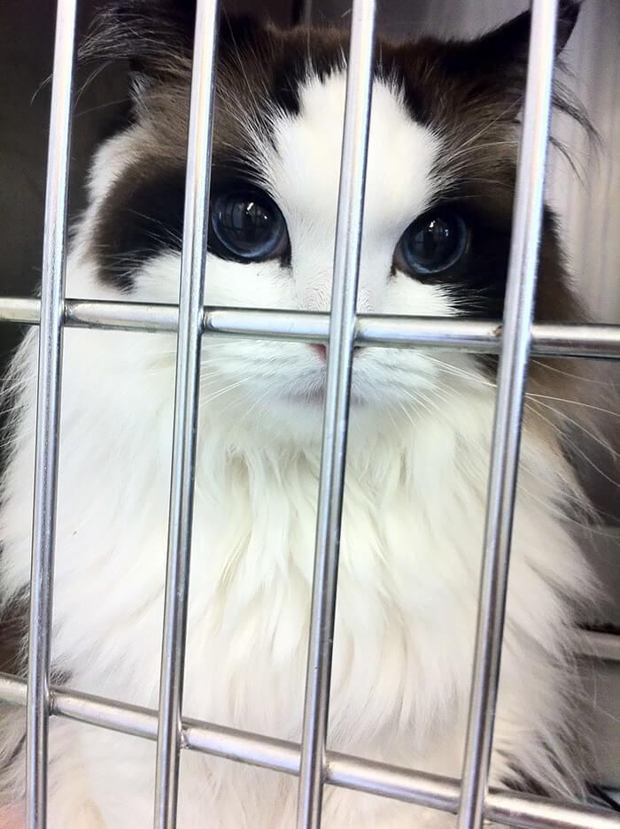 cutest cat ever 17 (1)