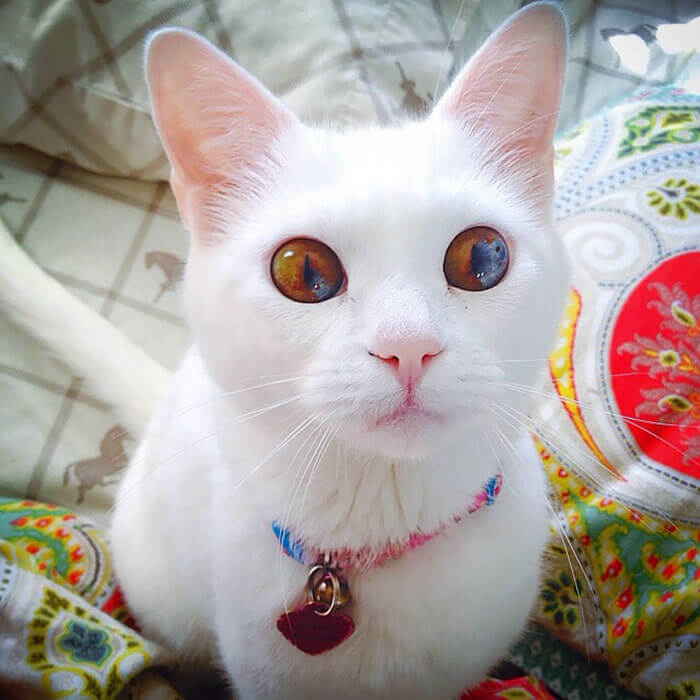 cutest cat ever 18 (1)