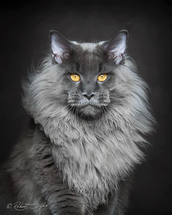cutest cat ever 20 (1)