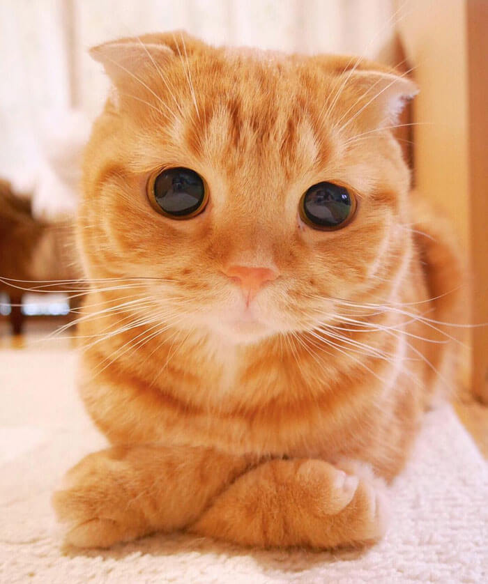 cutest cat ever 21 (1)