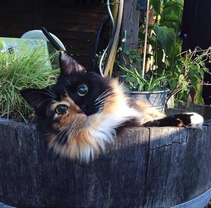 cutest cat ever 22 (1)