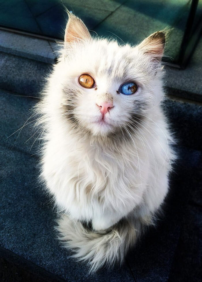 cutest cat ever 23 (1)