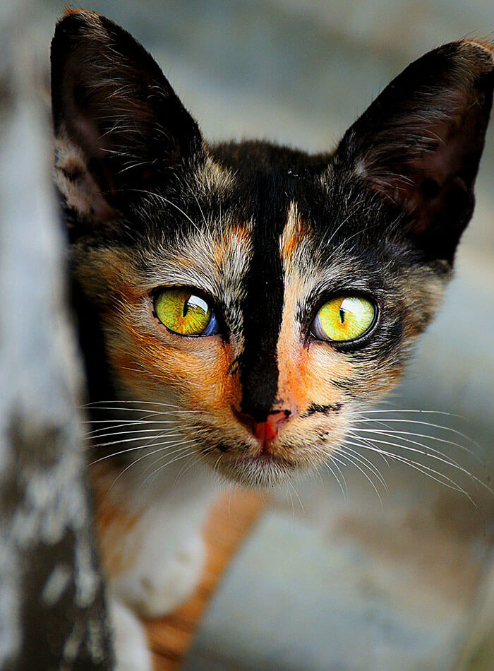most adorable cat in the world 24 (1)