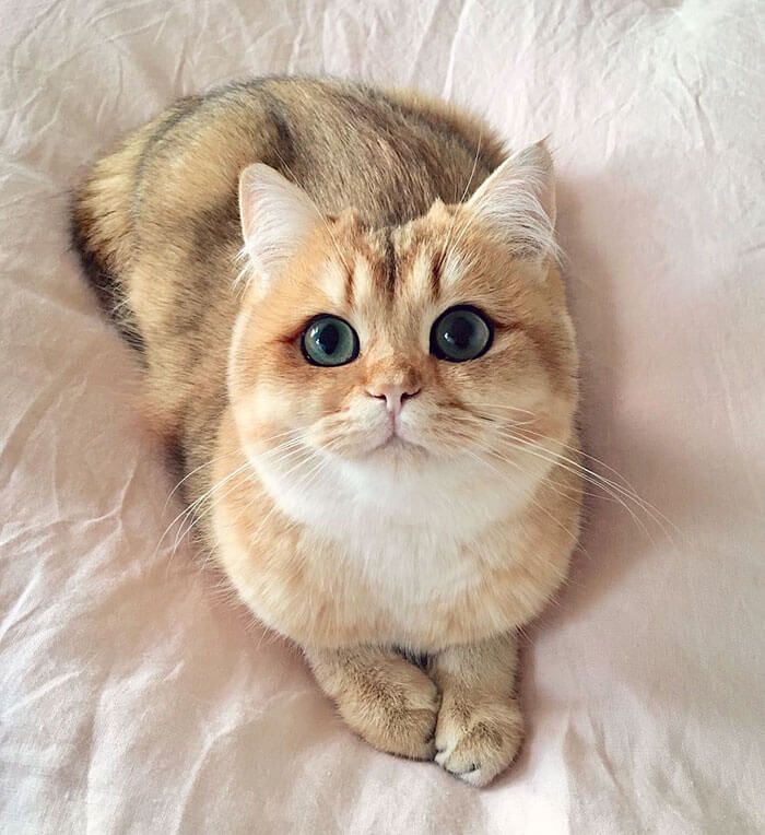 most adorable cat in the world 25 (1)
