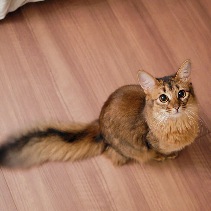 most adorable cat in the world 26 (1)
