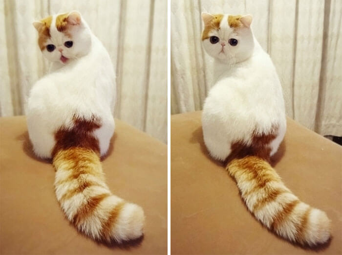 most adorable cat in the world 28 (1)
