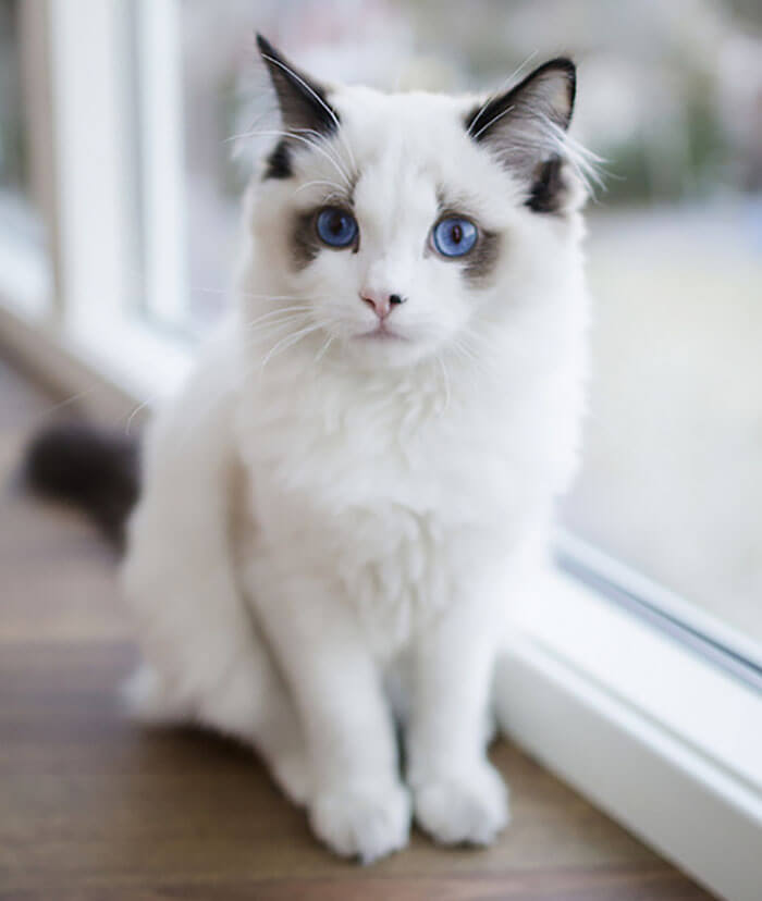 most adorable cat in the world 29 (1)