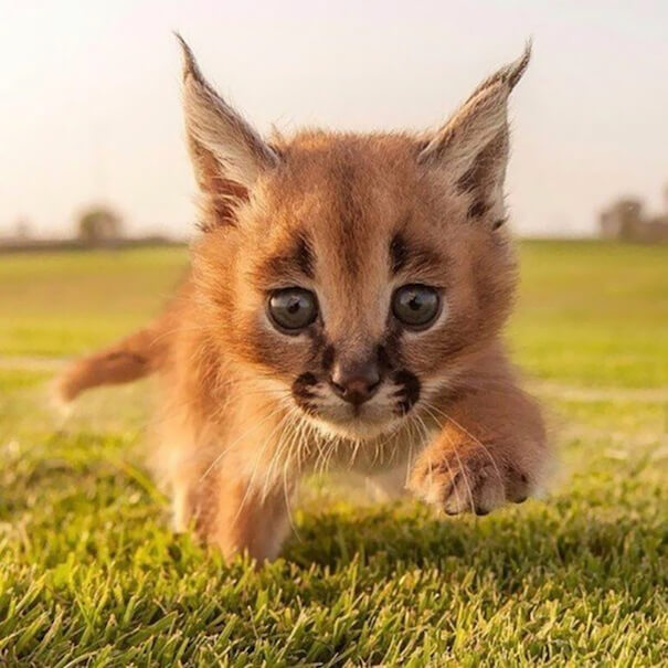 cutest cat of the world 3 (1)
