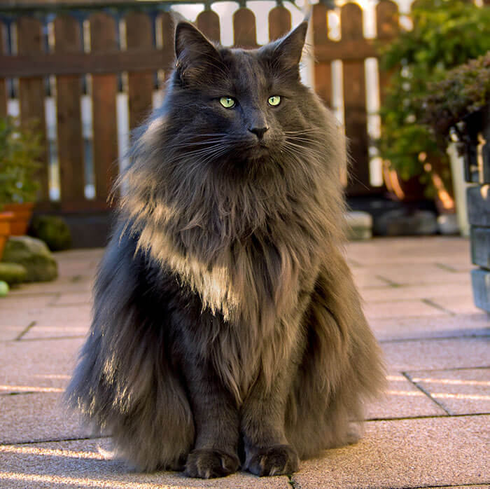 most adorable cat in the world 30 (1)