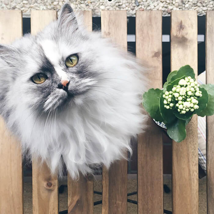most adorable cat in the world 32 (1)