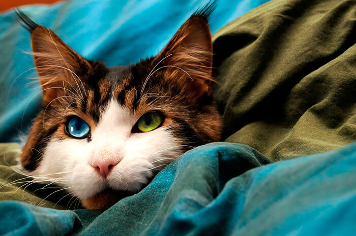 most adorable cat in the world 33 (1)