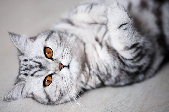 most adorable cat in the world 35 (1)