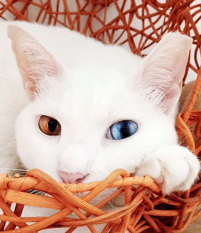 most adorable cat in the world 36 (1)