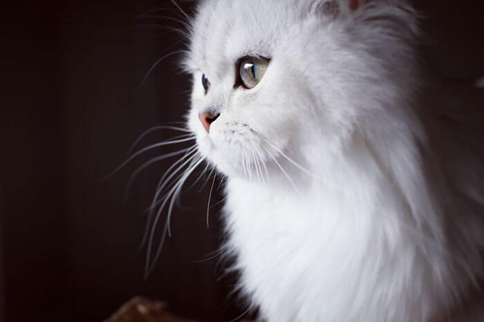 most adorable cat in the world 37 (1)