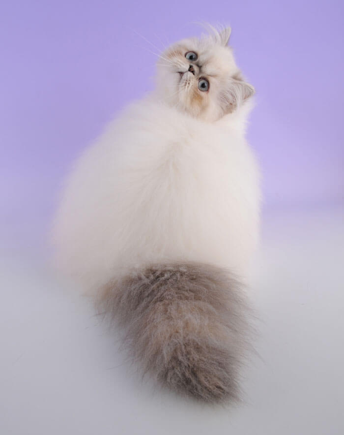most adorable cat in the world 38 (1)