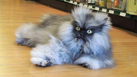 cutest kitten in the world 43 (1)