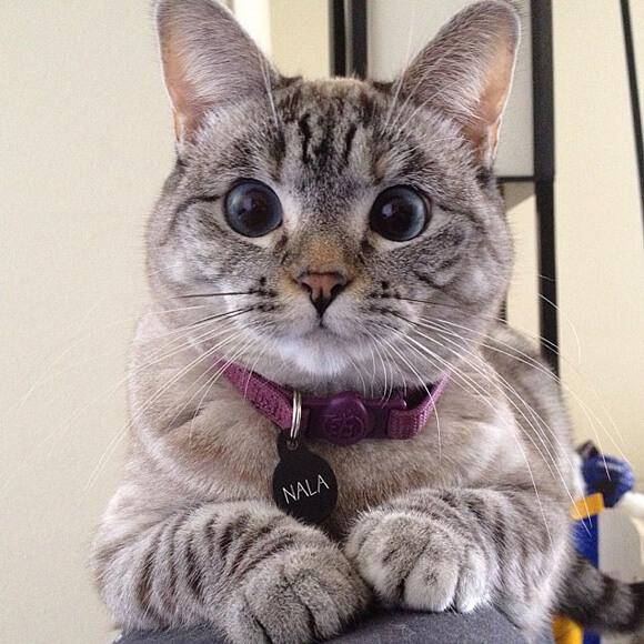 cutest kitten in the world 45 (1)