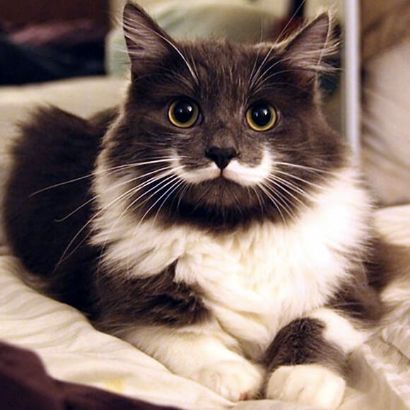 Is This The Cutest Cat In The World Or Maybe One Of These