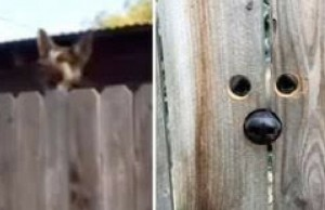 dog jumping over fence feat