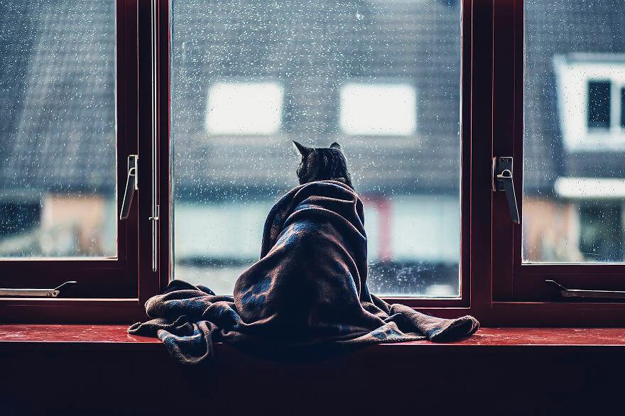 felicity berkleef cat pictures (1)