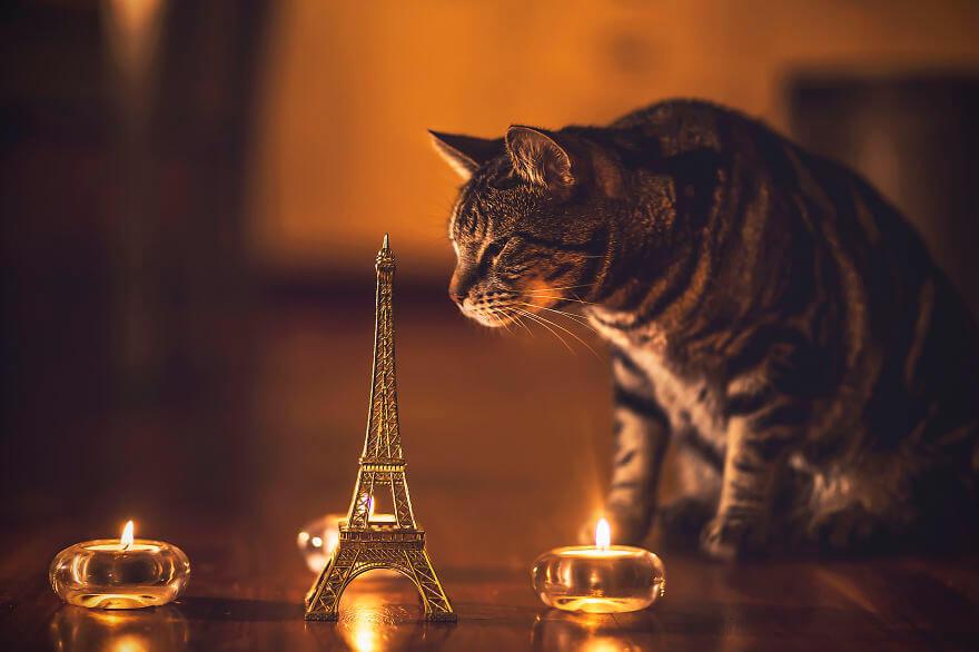 felicity berkleef cat photos 10 (1)