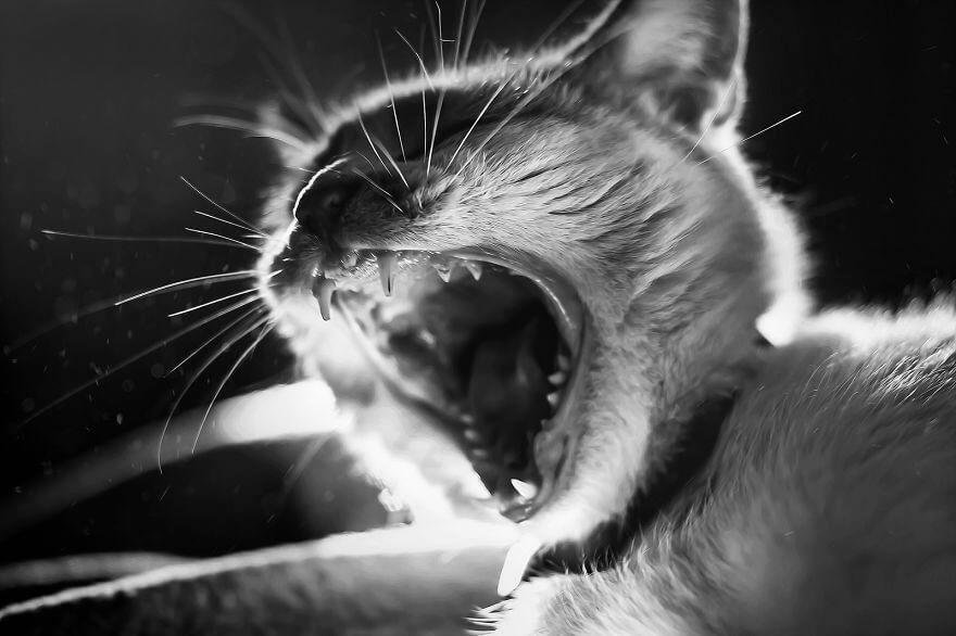 felicity berkleef cat photos 11 (1)