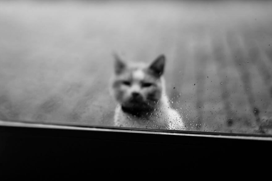 felicity berkleef cat photos 12 (1)