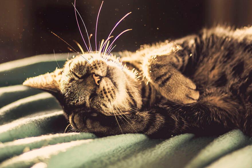 felicity berkleef cat images 13 (1)