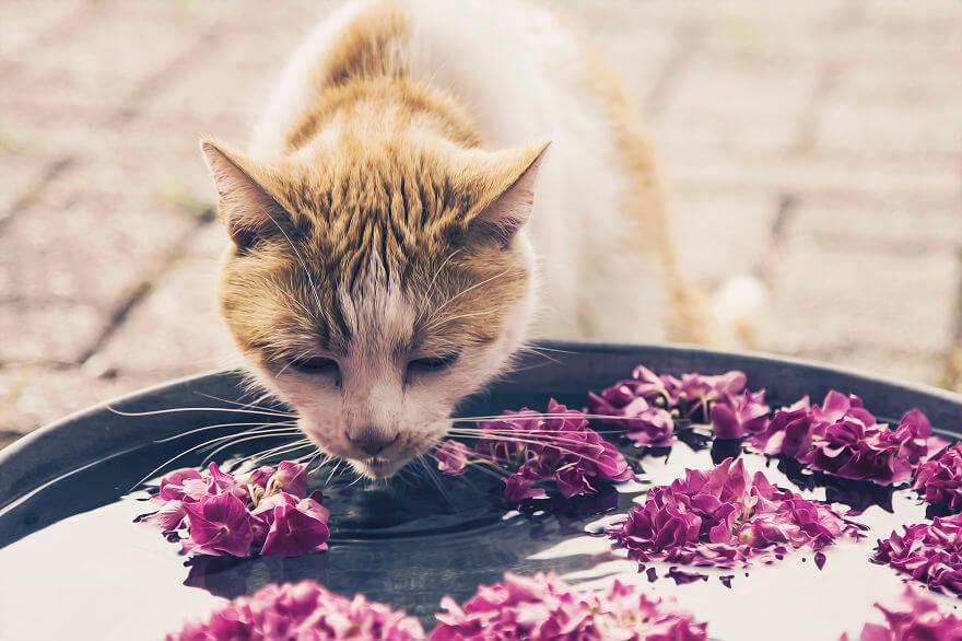 felicity berkleef cat images 14 (1)