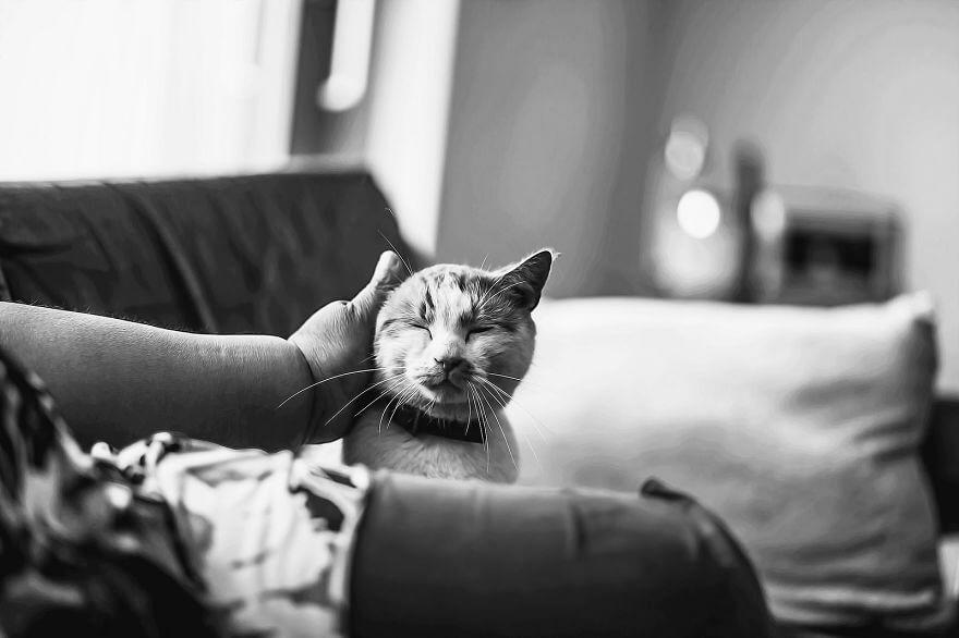 felicity berkleef cat images 15 (1)
