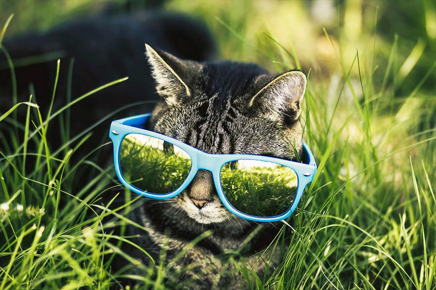 felicity berkleef cat images 16 (1)