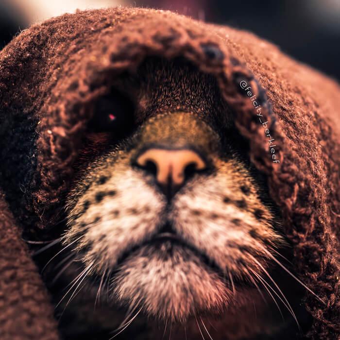 felicity berkleef cat images 17 (1)