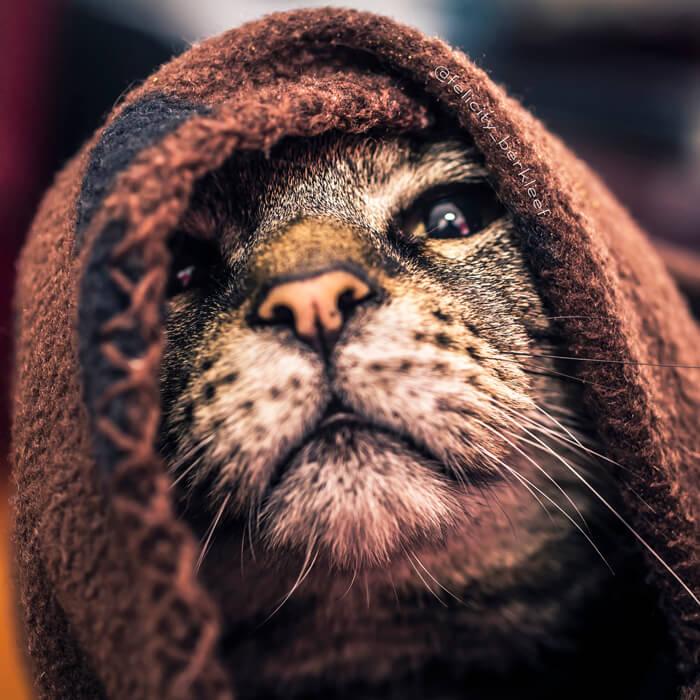 felicity berkleef cat images 18 (1)