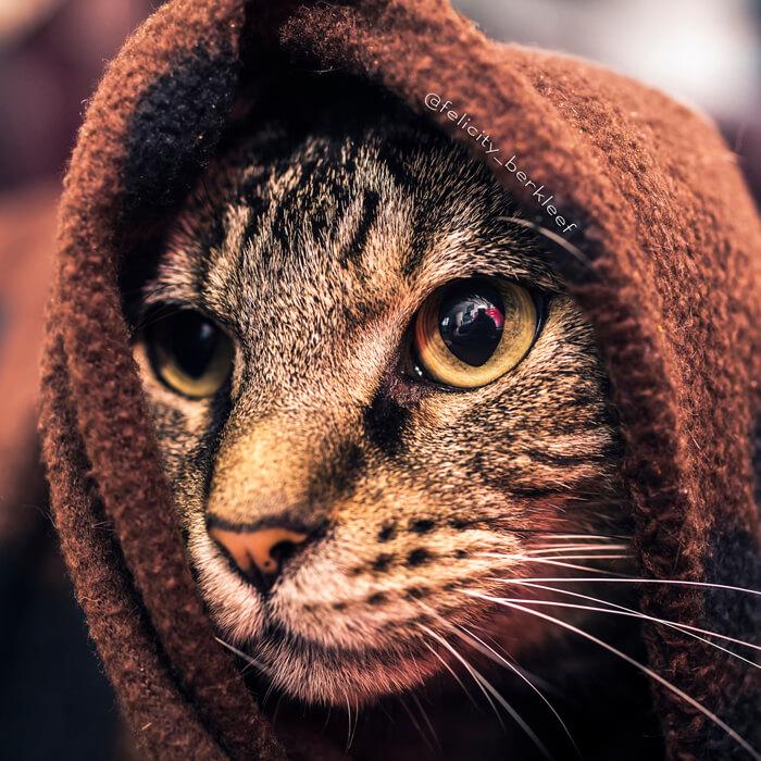 felicity berkleef cat images 19 (1)