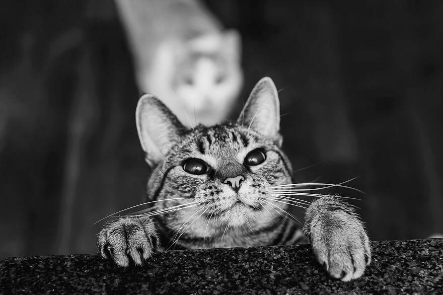 felicity berkleef cat pictures 2 (1)