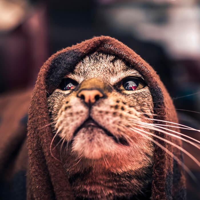 felicity berkleef cat images 20 (1)