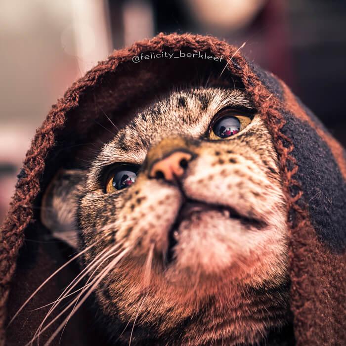 felicity berkleef cat pictures 22 (1)
