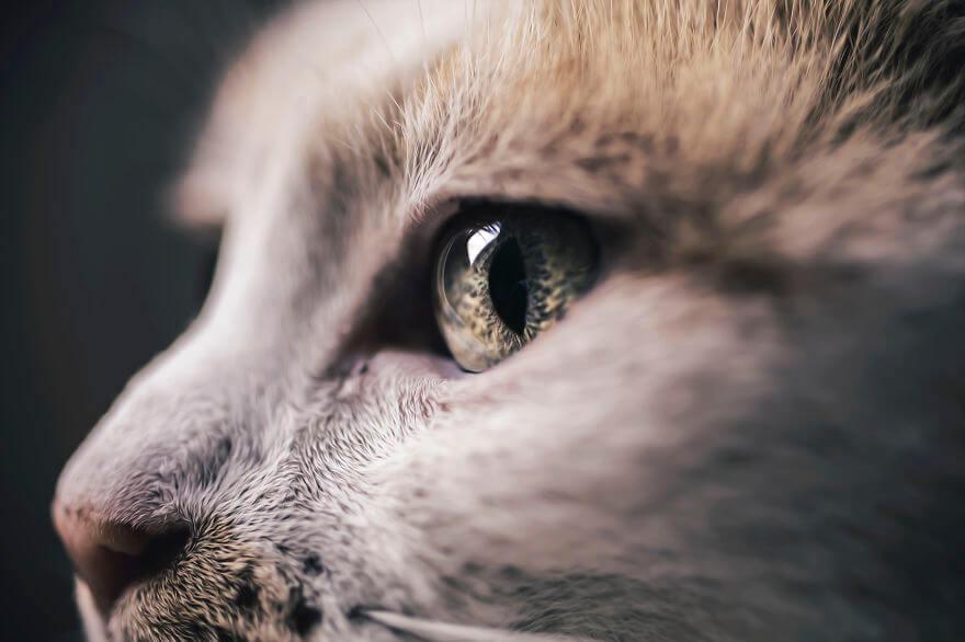 felicity berkleef cat photos 3 (1)