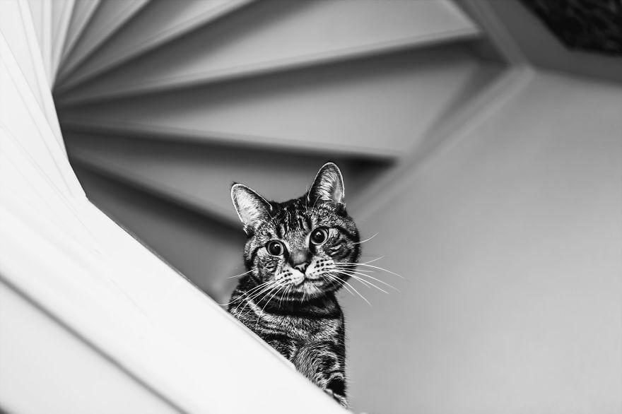 felicity berkleef cat photos 4 (1)