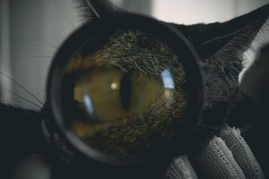 felicity berkleef cat photos 5 (1)