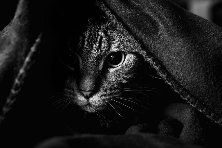 felicity berkleef cat photos 6 (1)