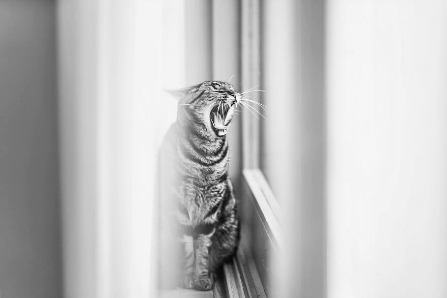 felicity berkleef cat photos 7 (1)