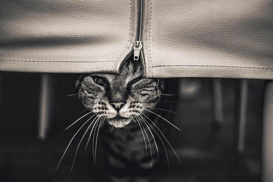 felicity berkleef cat photos 8 (1)