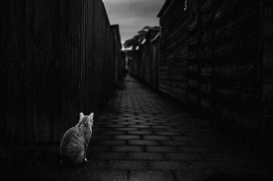 felicity berkleef cat photos 9 (1)