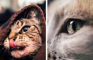 felicity berkleef cat pictures feat