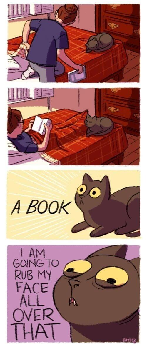 funny things cats do 28 (1)