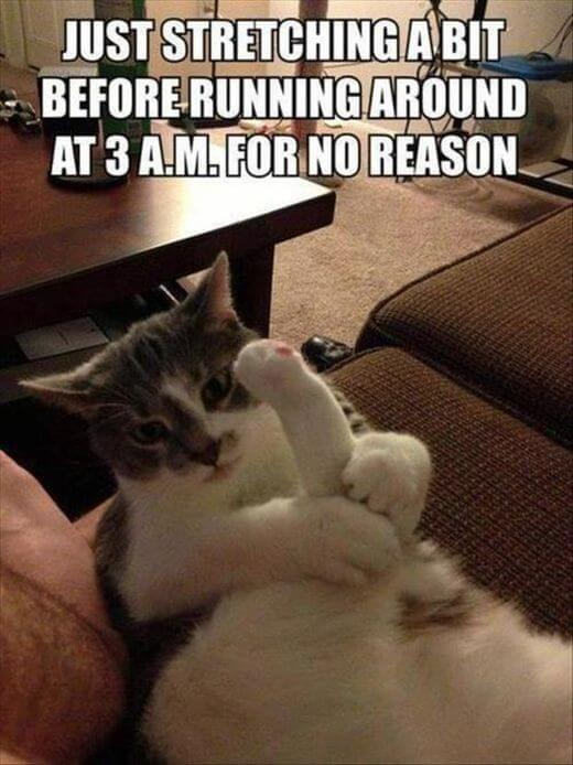 hilarious things cats do 9 (1)